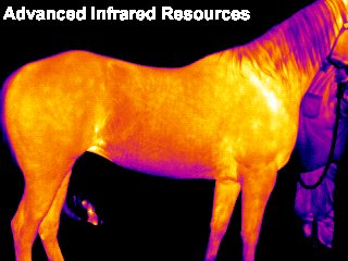 Infrared Thermography horse.jpg (20328 bytes)